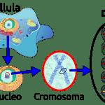 Difference Between Prokaryotic and Eukaryotic DNA