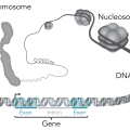 Difference Between Genomic and Plasmid DNA
