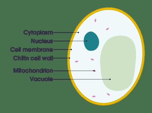 Key Difference - Intracellular vs Extracellular Fluids