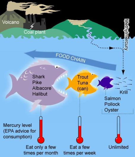 Difference Between Bioaccumulation and Biomagnification