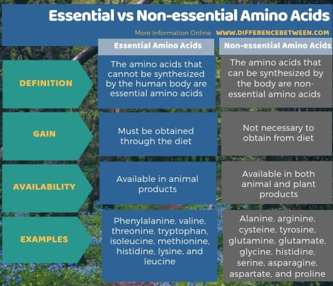 Difference Between Essential and Non-essential Amino Acids in Tabular Form