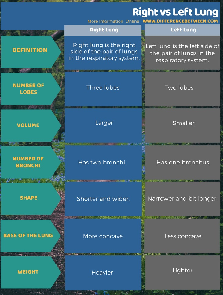 Difference Between Right and Left Lung | Compare the ...