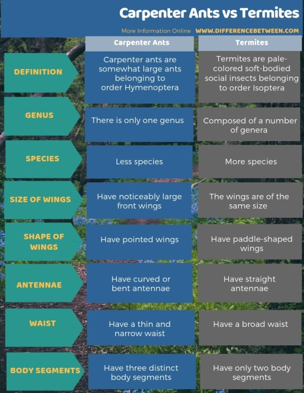 Difference Between Carpenter Ants and Termites - Tabular Form