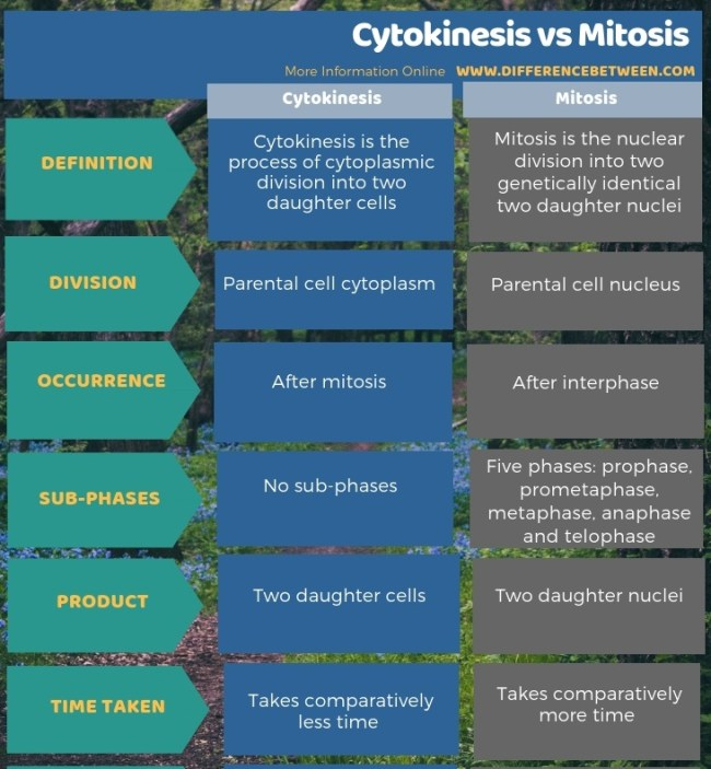 Difference Between Cytokinesis and Mitosis- Tabular Form