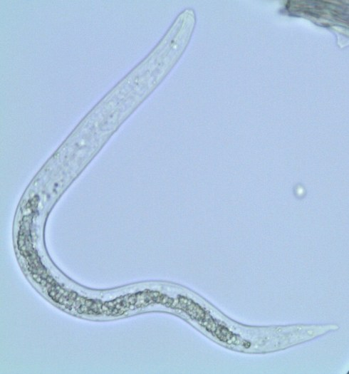 Difference Between Endoparasites and Ectoparasites