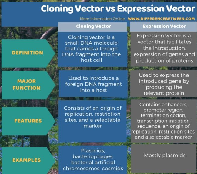 Difference Between Cloning Vector and Expression Vector in Tabular Form