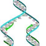 Difference Between Prokaryotic and Eukaryotic DNA Replication
