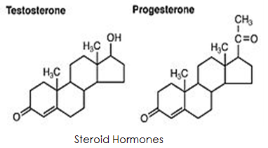 Is testosterone a steroid hormone steroids anemia