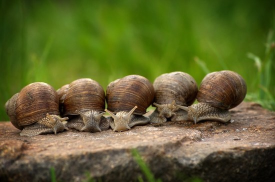 Difference Between Mollusks and Arthropods