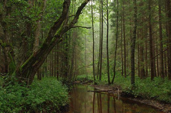 Key Difference - Ecotourism vs Nature Tourism