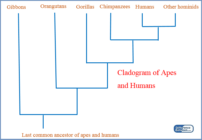 tree diagram problems and answers skull bone labeled difference between cladogram phylogenetic | vs