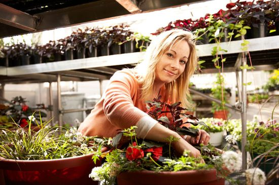 Key Difference - Plant Hormones vs Plant Growth Regulators