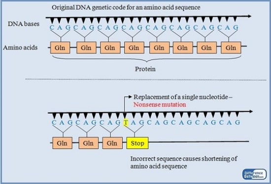 Key Difference - Missense vs Nonsense Mutation