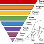 Difference Between Taxonomy and Phylogeny