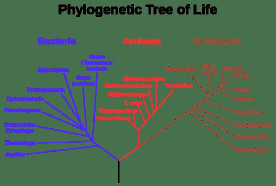 Key Difference - Taxonomy vs Phylogeny
