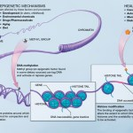 Difference Between Genetics and Epigenetics