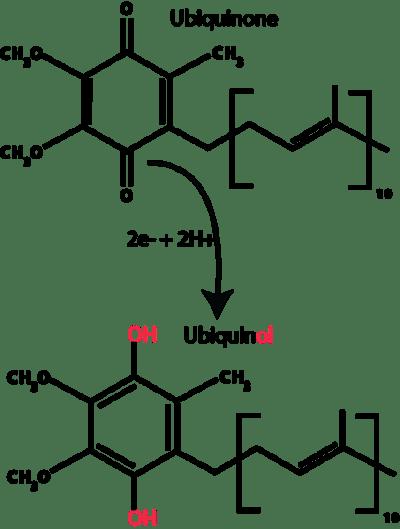Key Difference - Ubiquinone vs Ubiquinol