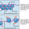 Difference Between DNA and Histone Methylation