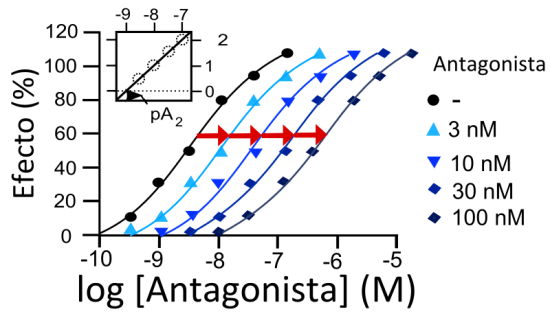 Key Difference Between Agonist and Antagonist Drugs