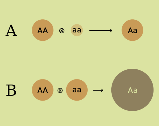 Difference Between Heterosis and Hybrid Vigour