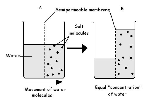 Difference Between Osmosis and Diffusion in Biology l