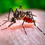 Difference Between Dengue Mosquito and Normal Mosquito
