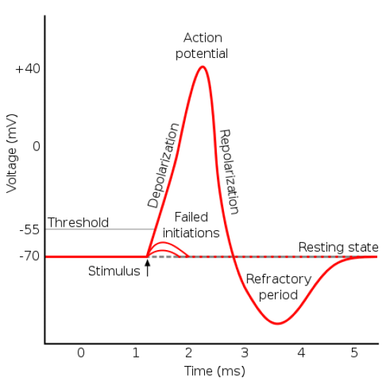 Difference Between Absolute and Relative Refractory Period