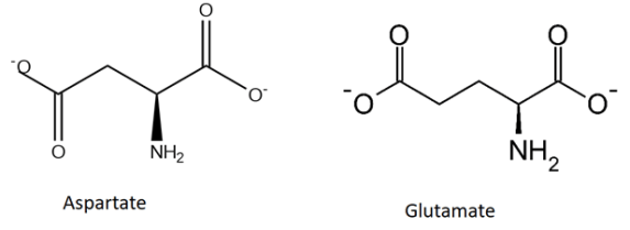 Difference Between Acidic and Basic Amino Acids