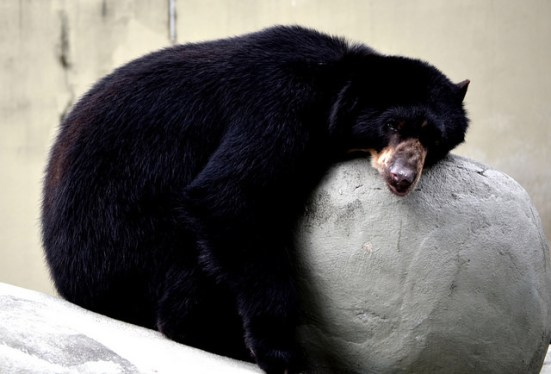 Key Difference Between Diapause and Hibernation
