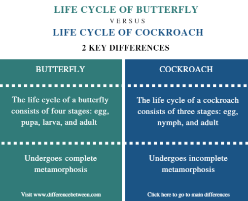 Difference Between Life Cycle of Butterfly and Cockroach - Comparison Summary
