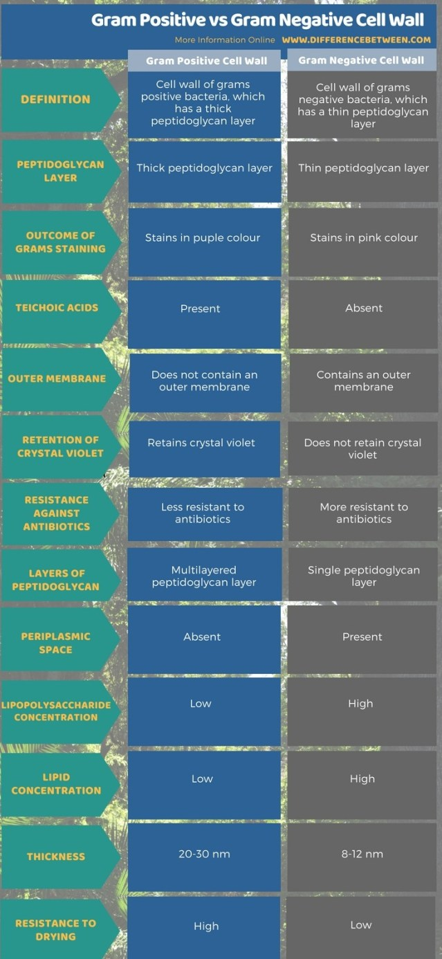 Difference Between Gram Positive vs Gram Negative Cell Wall in Tabular Form
