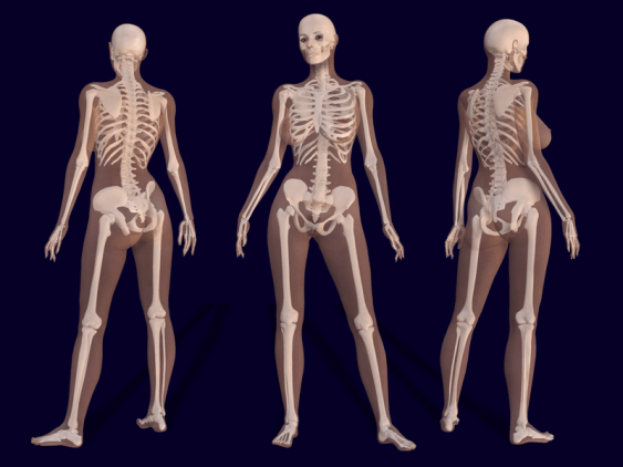 Difference Between Male and Female Bones