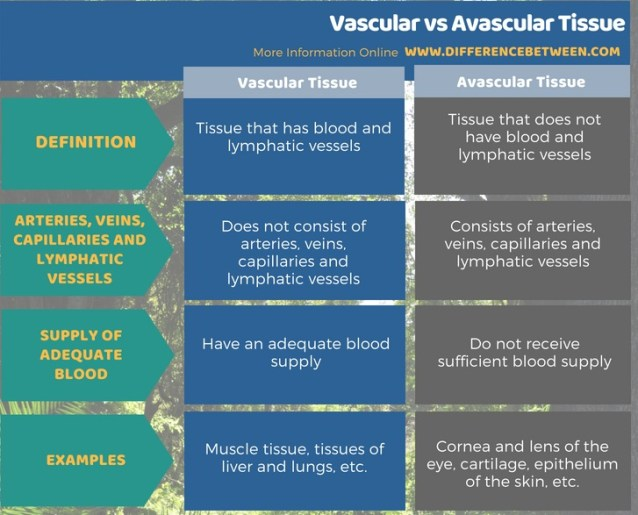 Difference Between Vascular and Avascular Tissue in Tabular Form