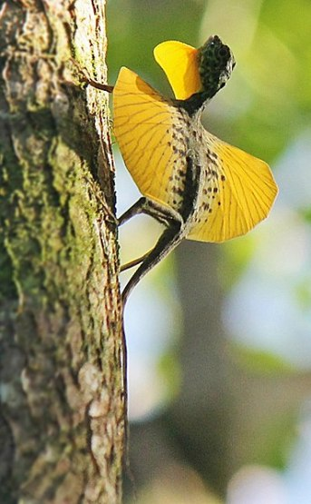 Difference Between Flying Lizard and Bird