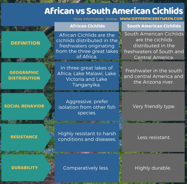 Difference Between African and South American Cichlids in Tabular Form