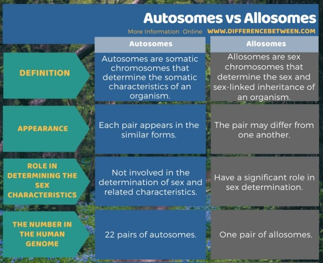 Difference Between Autosomes and Allosomes in Tabular Form