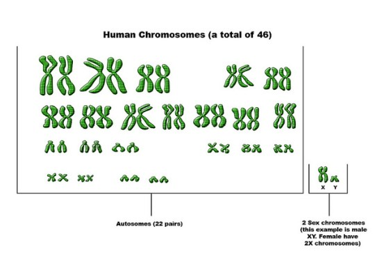 Difference Between Autosomes and Allosomes