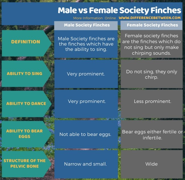 Difference Between Male and Female Society Finches in Tabular Form