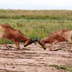 Difference Between Interspecific and Intraspecific Competition