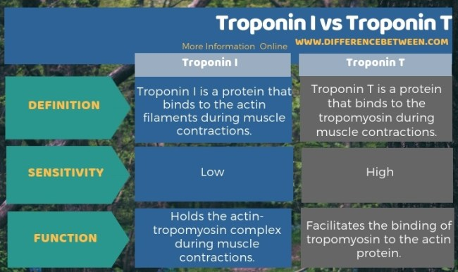 Difference Between Troponin I and Troponin T in Tabular Form