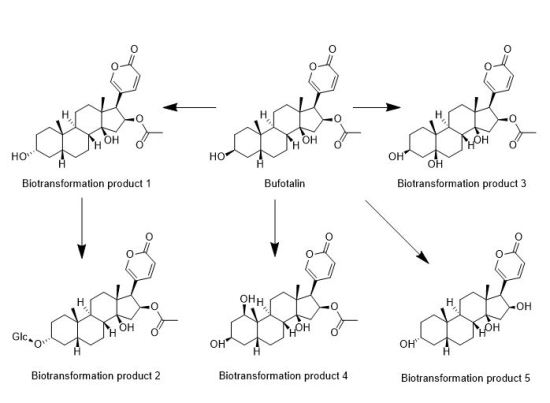 Difference Between Biotransformation and Metabolism_Fig 01