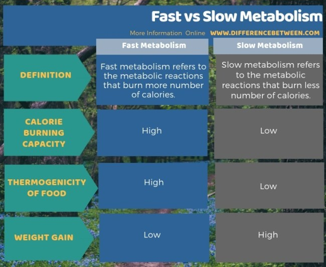 Difference Between Fast and Slow Metabolism in Tabular Form
