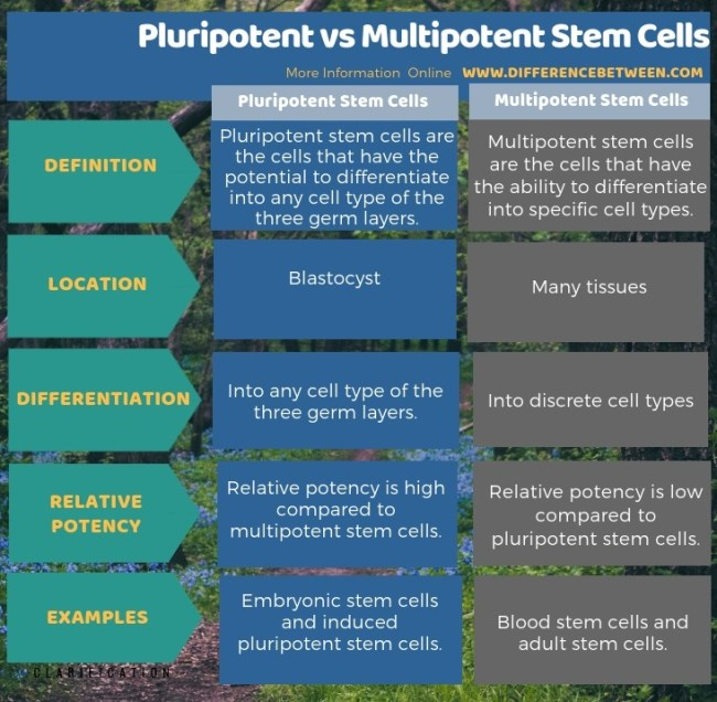 Difference Between Pluripotent and Multipotent Stem Cells in Tabular Form