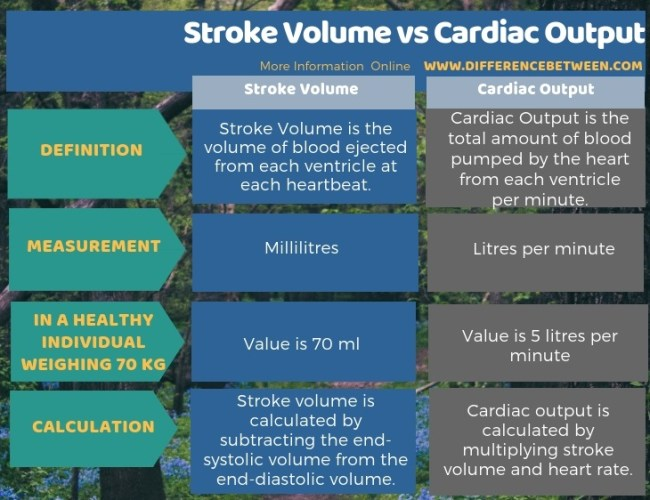 Difference Between Stroke Volume and Cardiac Output in Tabular Form