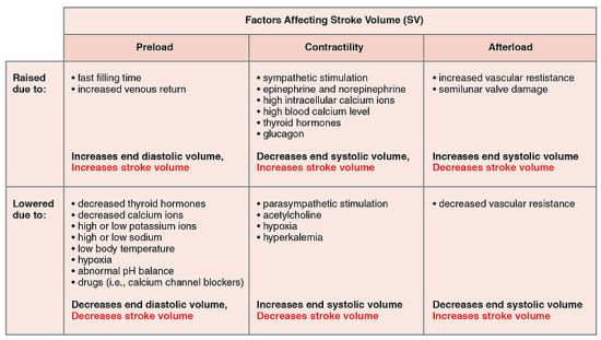 Key Difference Between Stroke Volume and Cardiac Output
