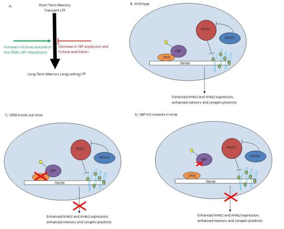Difference Between DNA Sequence Mutations and Epigenetic Modifications