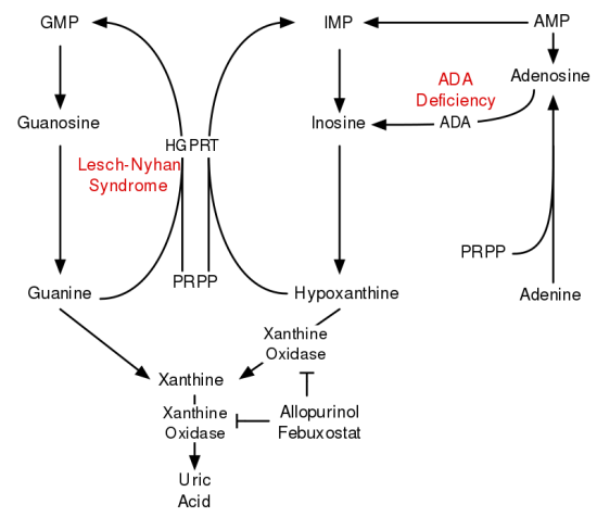 Difference Between De Novo and Salvage Pathway