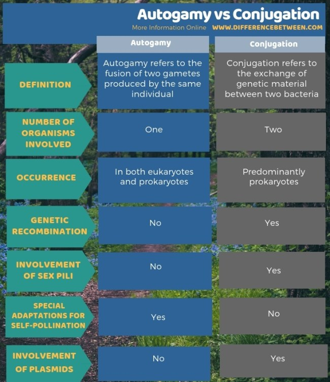 Difference Between Autogamy and Conjugation in Tabular Form