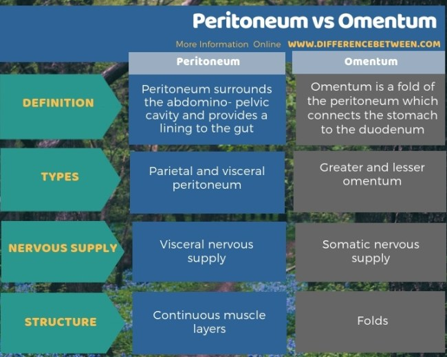 Difference Between Peritoneum and Omentum in Tabular Form