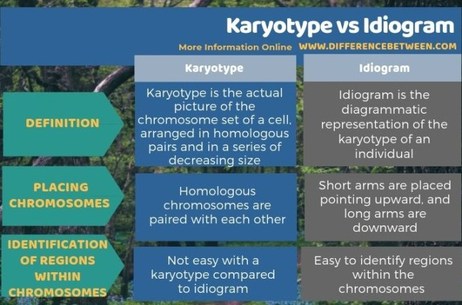 Difference Between Karyotype and Idiogram in Tabular Form